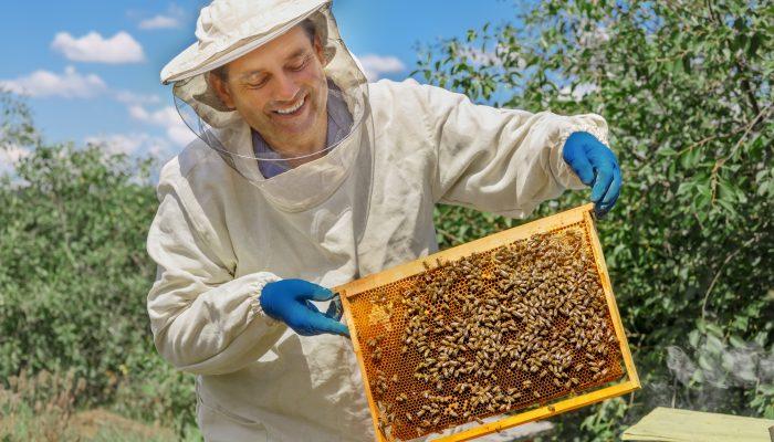 Introduction to Beekeeping Virtual Workshop